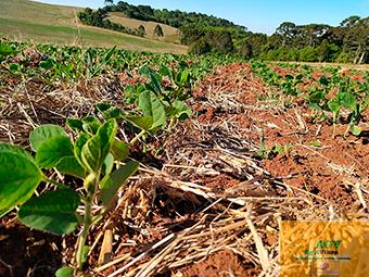 BIO-ATIVAÇÃO-DE-SEMENTES-03.jpg